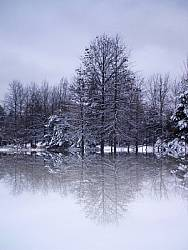 winter picture with snow, trees, and a mirage effect